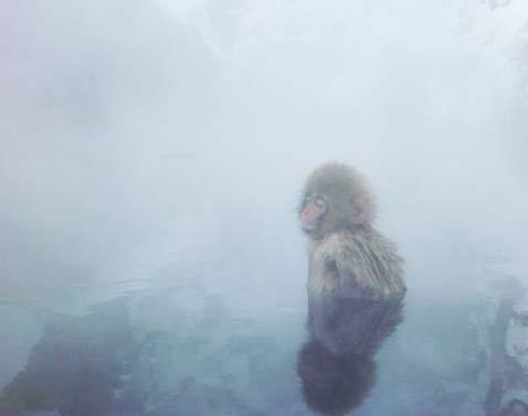 (c)edamame-monkey-snow